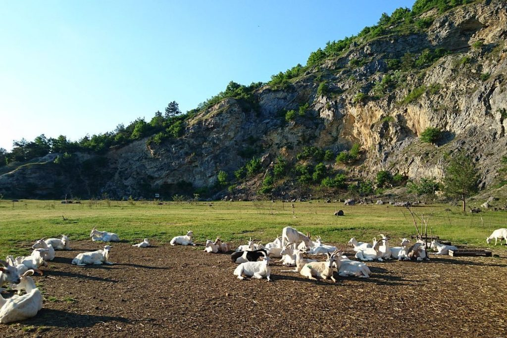 Devín Hike and Drink Tour in Carpathian mountains near Bratislava: by Authentic Slovakia