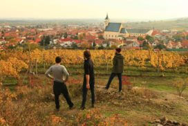 Wine tasting in Svaty Jur, Little Carpathian wine region near Bratislava